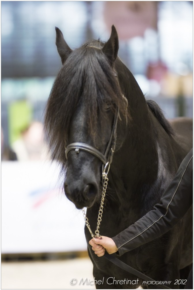 Picture of salon du cheval de paris 2012 arabo frison horse for Salon du cheval paris adresse