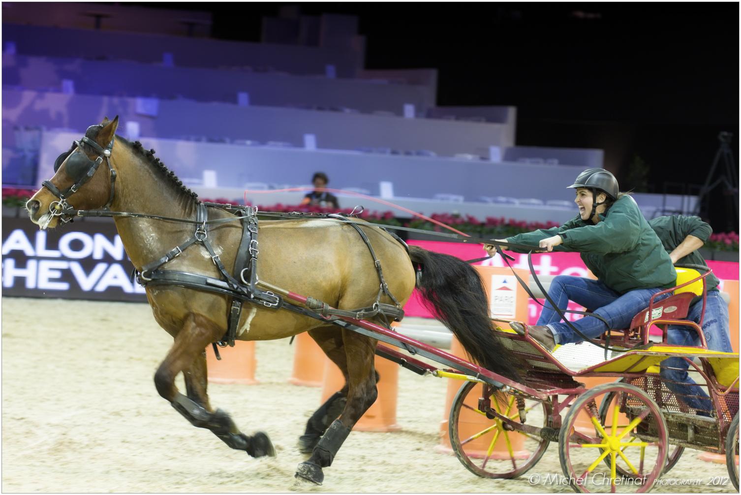 Picture of salon du cheval de paris 2012 paris 39 cup d for Salon de paris