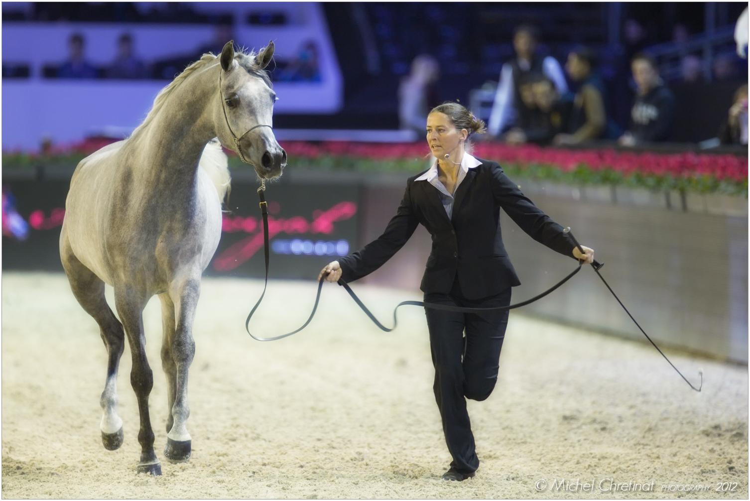 Picture of salon du cheval de paris 2012 arabian horse for Salon du cheval paris adresse